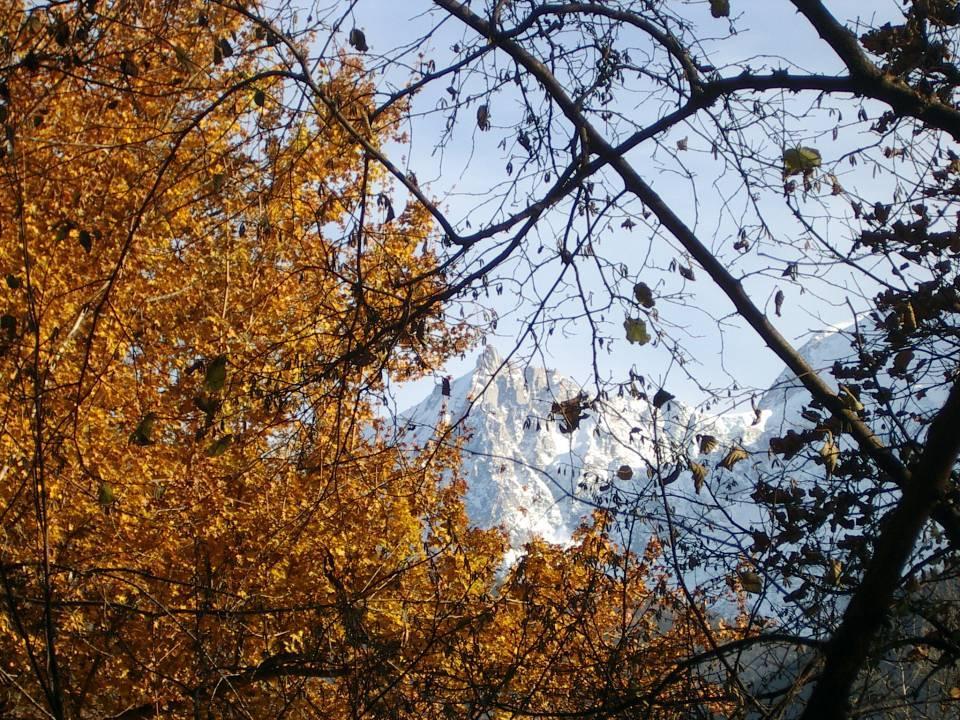 Feuilles et Aiguilles en automne à Passy, au Lavouet (cliché Bernard Théry, 2012)