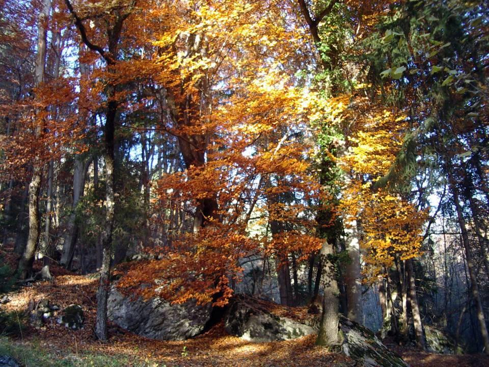 Féerie de l'automne, au Lavouet, à Passy (cliché Bernard Théry, 2012)