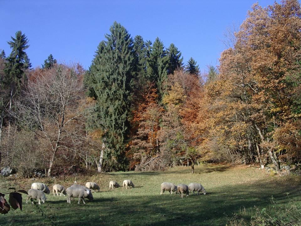 Moutons et couleurs d'automne à Passy, Le Lavouet (cliché Bernard Théry, 2012)