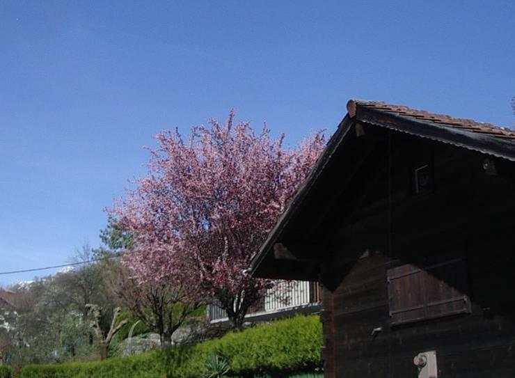 Le printemps à Passy, au chef-lieu (cliché Bernard Théry)