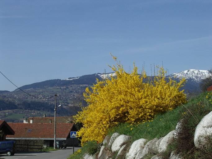 Le printemps à Passy, chemin de l'Epagny (cliché Bernard Théry)
