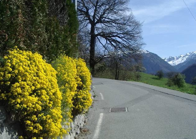 Le printemps à Passy, à Saint-Antoine (cliché Bernard Théry)
