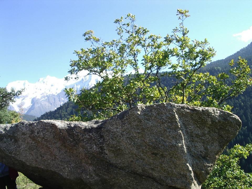 Bloc erratique à la pointe Ouest des Gures, pierre dite « Laby » au sommet de la falaise sud-ouest ; à l'arrière-plan, la chaîne du Mont-Blanc (cliché Bernard Théry)
