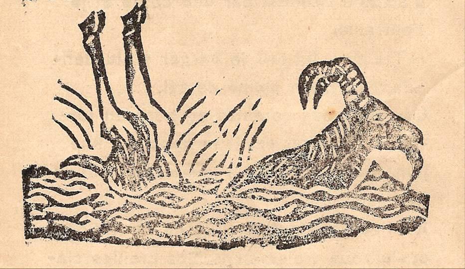 Linogravure du journal scolaire de Combloux, « Contes des neiges », mai 1933, p. 4, Troupeaux de chèvres sur les alpages, par E. Million, 11 ans