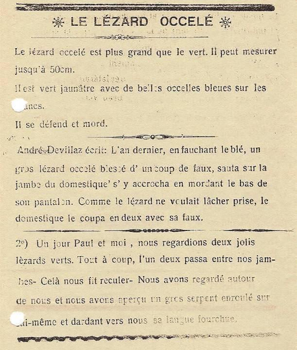 Journal scolaire de Passy, « Face au Mont-Blanc », avril-mai 1938 p. 8, Le lézard ocellé, par André Devillaz, dessin Paul Rigoli
