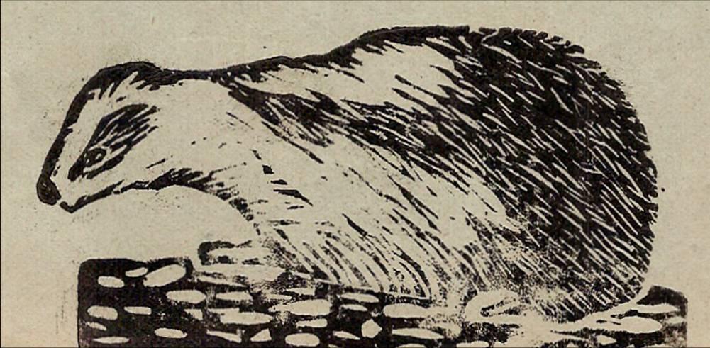 Linogravure du journal scolaire de Passy « Face au Mont-Blanc », novembre-décembre 1938, p. 5, Chasse au blaireau, par Monique Rihouvy, 11 ans 6 mois