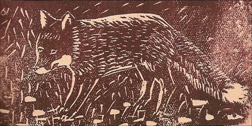 Linogravure du journal scolaire de Passy « Face au Mont-Blanc », décembre 1946, p. 9 Le renard tenace, par Pierre Thierriaz, 12 ans 7 mois
