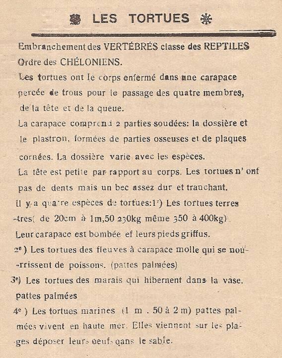 Journal scolaire de Passy, « Face au Mont-Blanc », p. 4, Les tortues, renseignements rassemblés par Serge Buezeck, B. Magnin et L. Ganis, linos de M. Devillaz