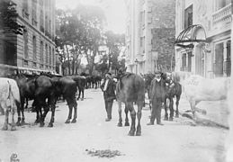 Réquisition des chevaux à Paris en 1914 (Source Wikipedia art. Mobilisation)