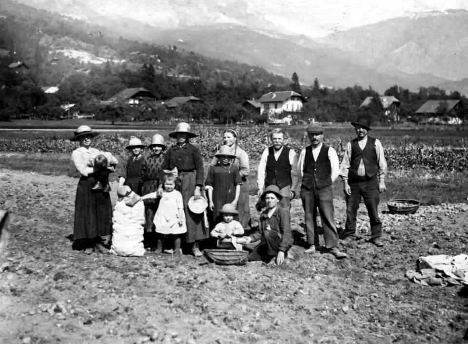 L'arrachage des pommes de terre par la famille de René Fivel à Passy (Coll. Christiane Fivel ; P. Dupraz, Traditions et évolution de Passy, p. 48)