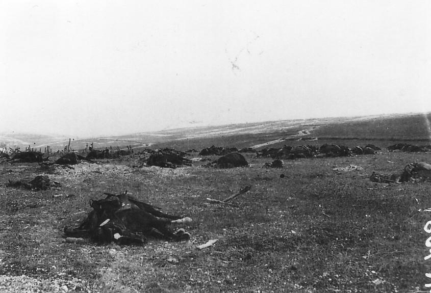 Les cadavres des chevaux après la charge héroïque du 5ème Hussards le 25 septembre 1915 devant la ferme-fortin de Beauséjour (site leshussardsdelauzun)