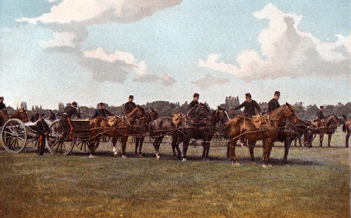 « Cheval de trait léger et cheval d'attelage d'artillerie ne font qu'un » (Comte de Robien, 1909). (Site attelage-patrimoine)