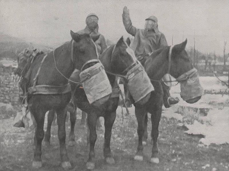 Protection des chevaux contre les gaz toxiques (site rosalielebel75, art. gaz de combat)