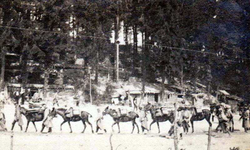 Convoi de mulets (site premiere-guerre-mondiale-1914-1918)