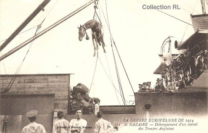 Débarquement d'un cheval des troupes anglaises à St-Nazaire (coll. Rosine Lagier, site documentation.equestre, art. le cheval d'armes)