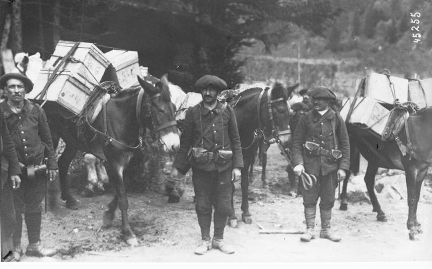 Ravitaillement en munitions dans les Vosges [Chasseurs alpins tenant des mulets chargés de caisses de munitions] : [photographie de presse] / [Agence Rol] (site gallica BNF)