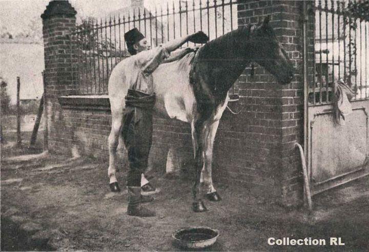 Pour les rendre moins vulnérables, les chevaux à la robe claire sont dissimulés sous une teinture brune (coll. Rosine Lagier site documentation.equestre, art. le cheval d'armes)