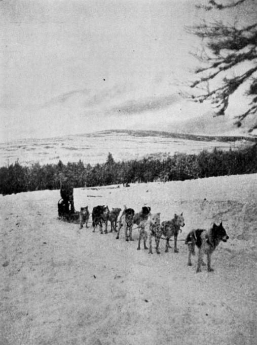 Equipage canin des chiens de l'Alaska. Un traineau attelé (site chiensdetraineau.free)