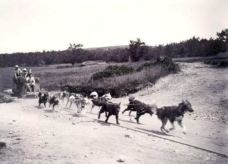 Tanet à la Schlucht attelage de chiens, avec au fond la route des crêtes – Crédits Pascal DURAND (site legrandshivarit)