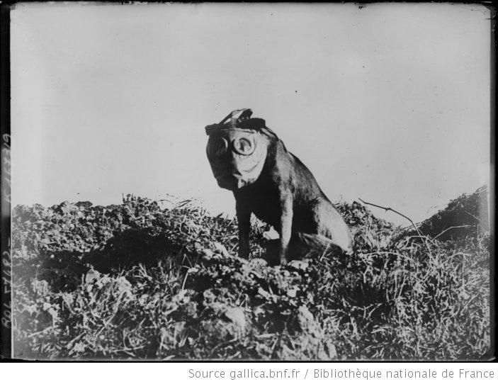 Chien équipé d'un masque à gaz, 1920, BNF/Gallica (site peccadille.net)