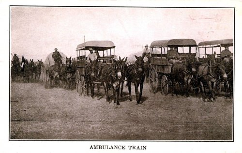 Train d'ambulance (deux paires de mule par fourgon) de l'American Expeditionnary Force envoyée en France en 1917. (site attelages-magazine.com)