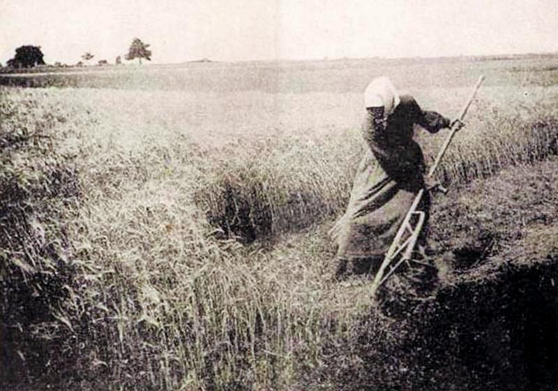 Femme maniant la faux (site syndicat agricole.com, page les paysans et la Grande Guerre)